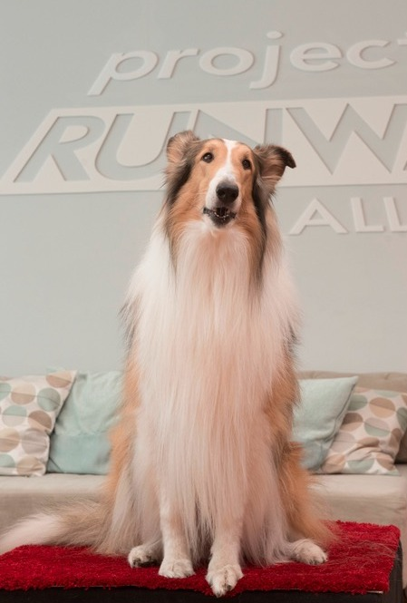 Project Runway All Stars 2015 Spoilers – Week 12 Preview 2